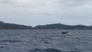 120213_hanateru_whale_a.jpg