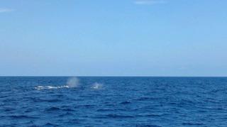 120216_hanateru_whale_b.jpg
