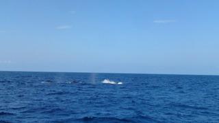 120216_hanateru_whale_c.jpg