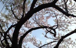 120413_hanateru_d.jpg