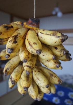 130709_hanateru_banana.jpg