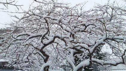 140208_hanateru_snow_a.jpg