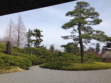 150318_hanateru_b.JPG