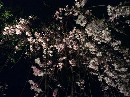 150411_hanateru_a.jpg
