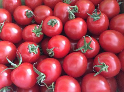 160308_hanateru_tomato.jpg