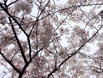 160331_hanateru_a.jpg