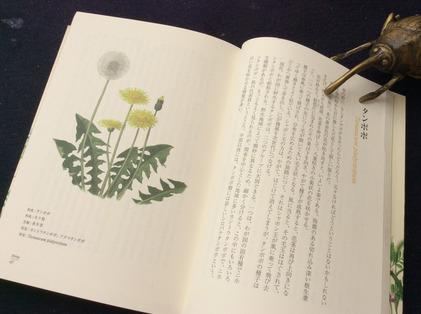 160506_hanateru_haru.jpg