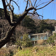 180224_hanateru_study.jpg